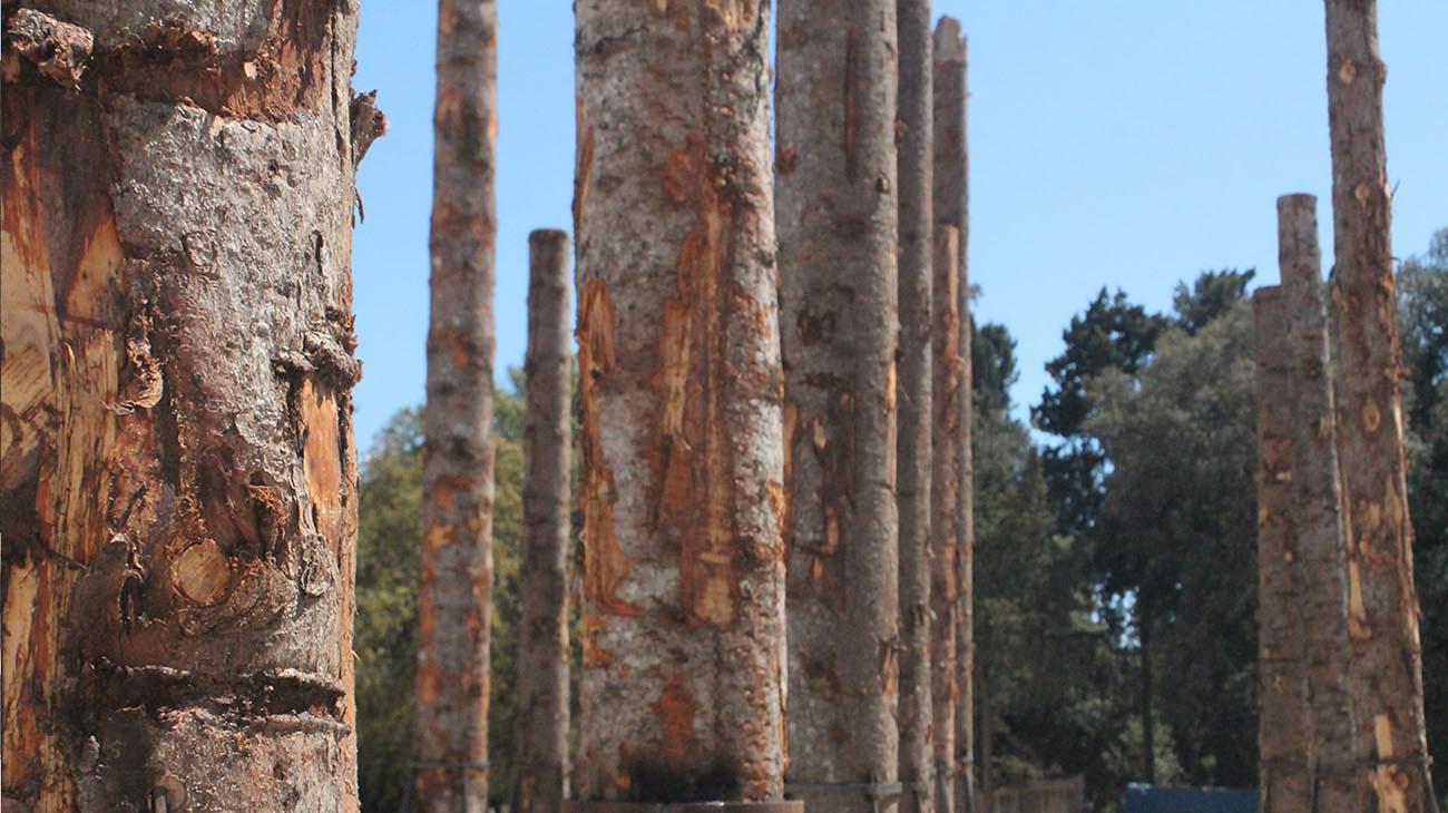 Il Bosco Morto de Le Troiane. Così Boeri restituisce vita agli alberi della Carnia